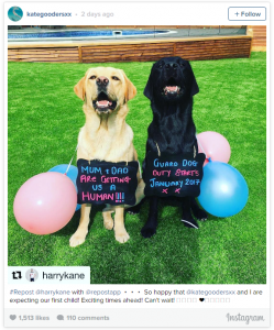 Harry kane Striker Tottenham Hottspur sudah mau jadi ayah